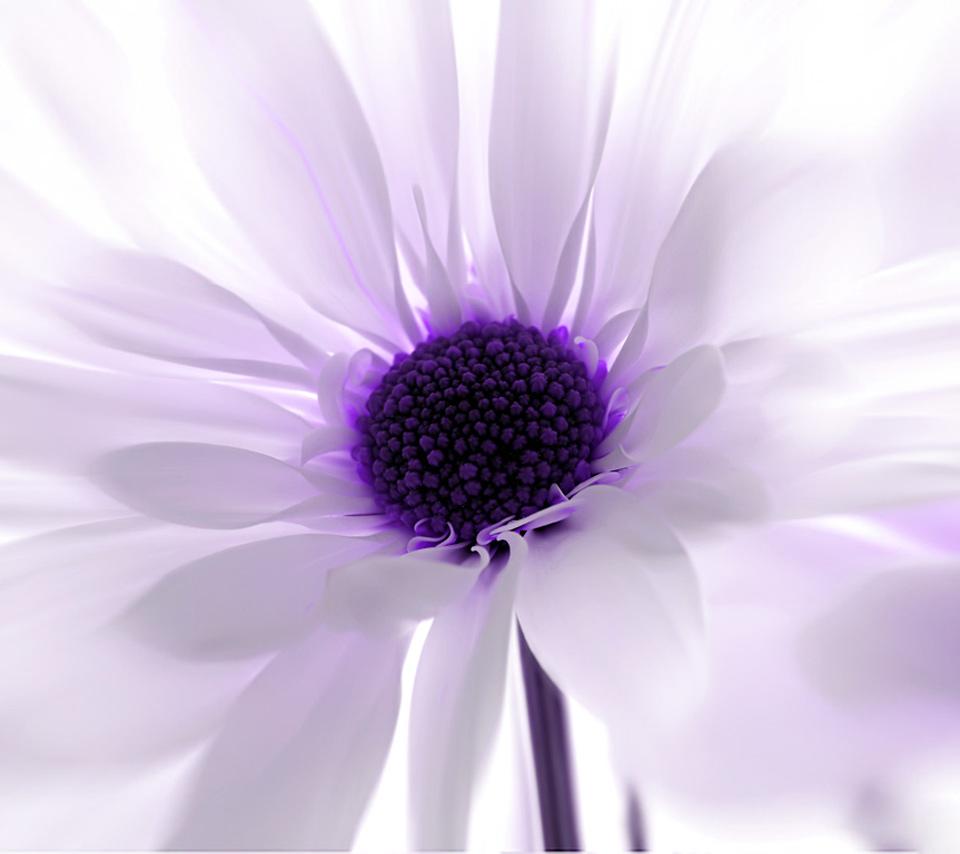 HD Flower Wallpaper For Tablet PCs