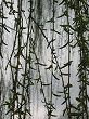 šumenje vetra v kodrih drevesa │ otožna muzika mojih pesmi │ ki jo za ptico poje moja duša