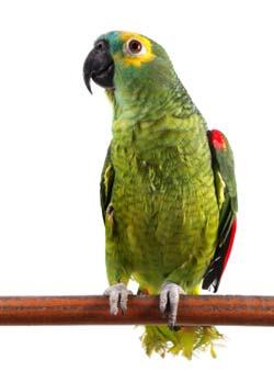 Num prédio, vivia um homem que tinha um papagaio. Nesse mesmo prédio