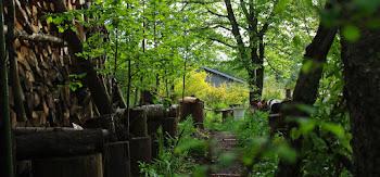 5月ある日の庭