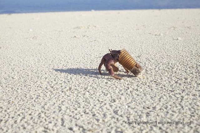 10 fotos de caranguejos presos em tampas de garrafas