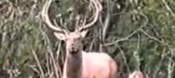 Κυνηγός τρώει πολύ ξύλο από το θήραμα [video]