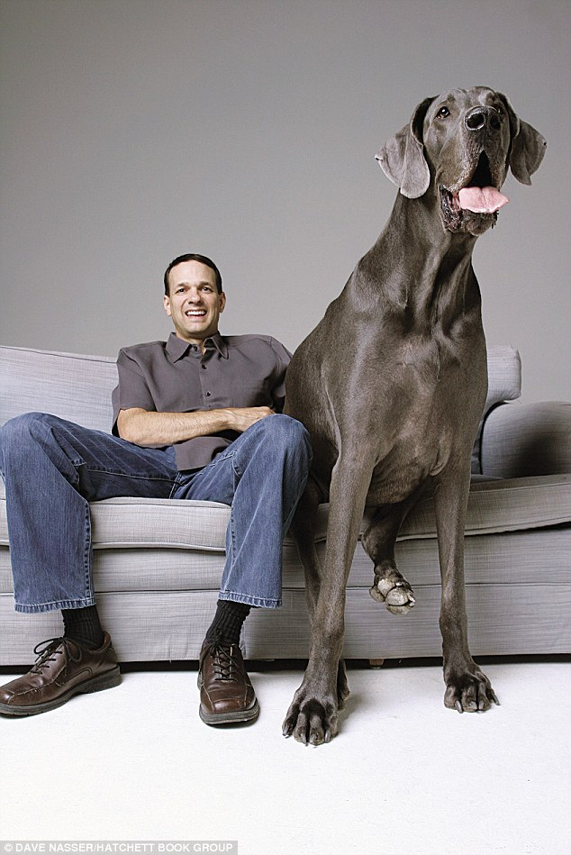 World s biggest dog 2012 tallest dog in the world world records