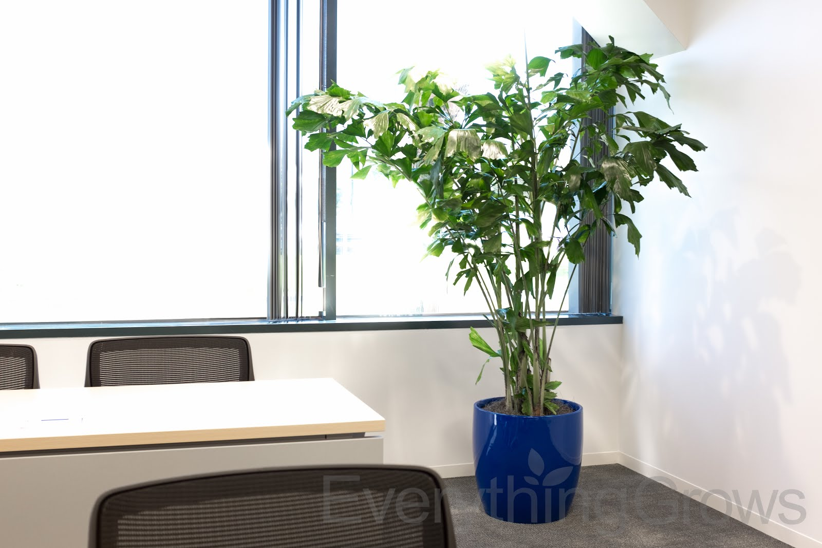 Plants For Office Space