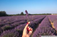 http://solli-kanani.com/2014/07/la-vudele-organic-holidays-in-provence/