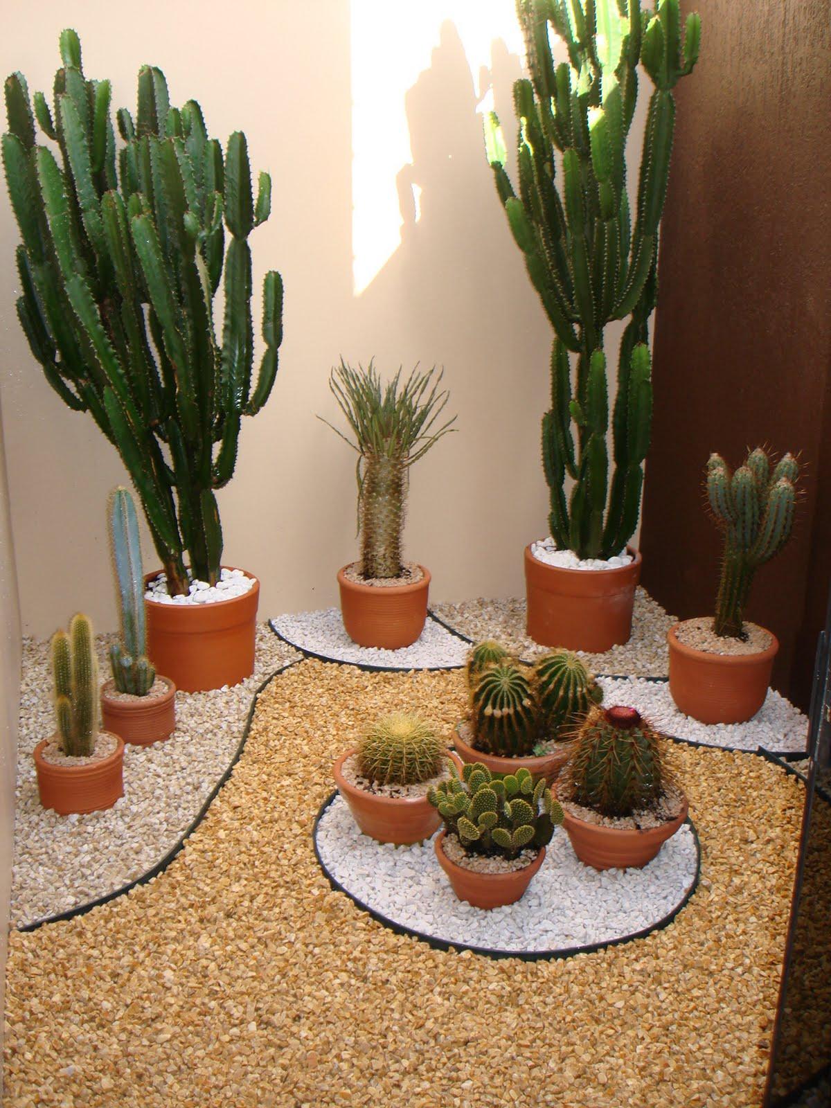 plantas jardim pequeno:Espero que gostem.
