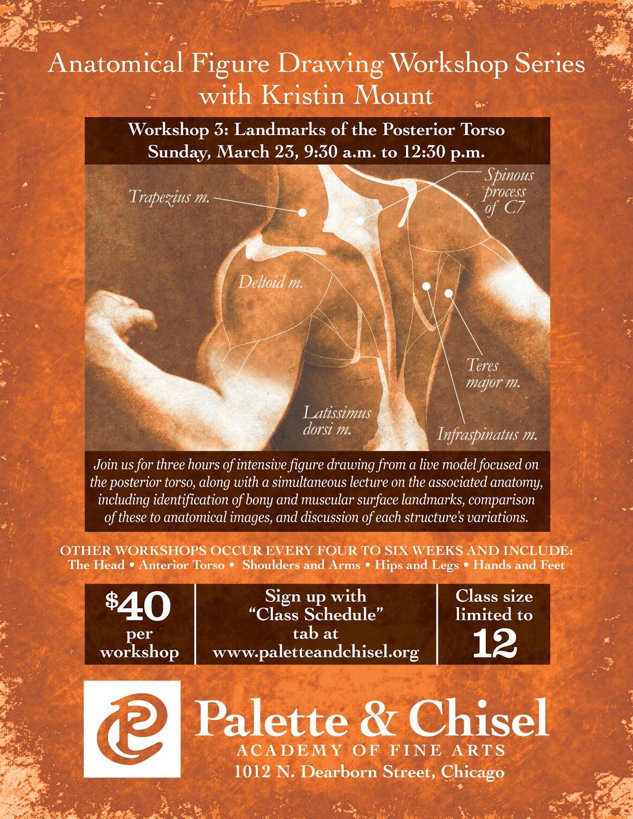 Human Anatomy For The Artist Posterior Torso Anatomical Figure