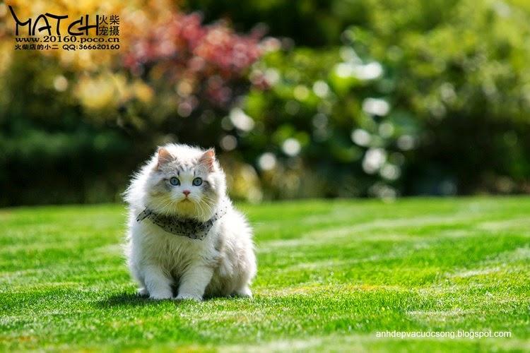 Tiểu thư mèo xinh đẹp 5