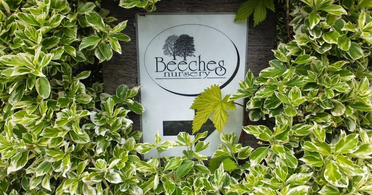 Beeches Nursery Online