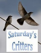 Sat. Critter Party