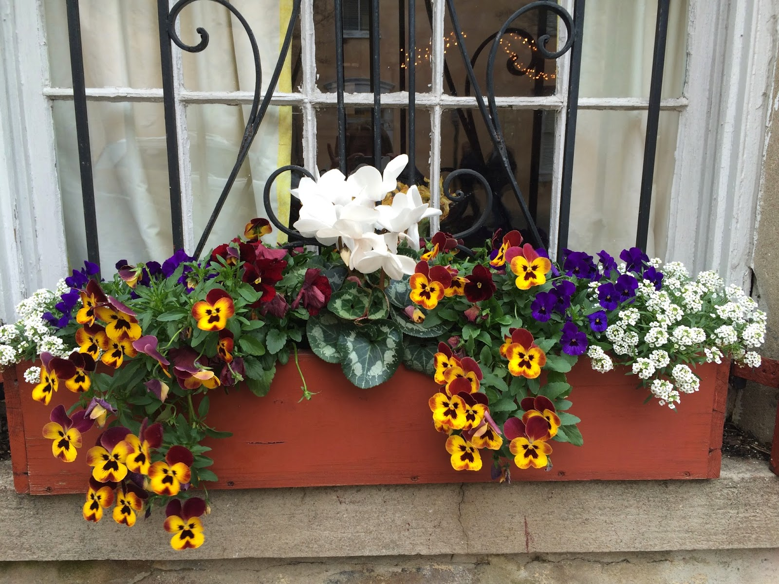 An ex&le of a small window box with small \u201cthriller\u201d in the middle. Take note at how the color of the pansies echoes the color of the box itself. & THE DEFINITIVE GUIDE TO WINDOW BOX DESIGN | The Impatient Gardener