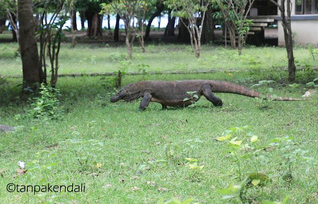 Komodo, Nusa Tenggara Timur