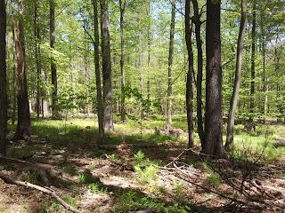 Forest next to Kingman Farm