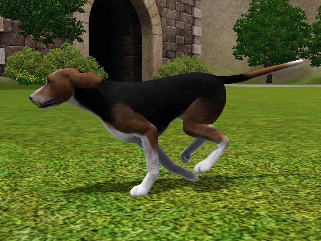 Sims 3 Afghan Hound My Sims 3 Blog: Honey ...