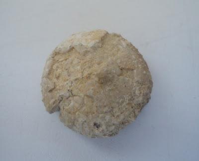 Fossil Sea Urchin / Echinoid