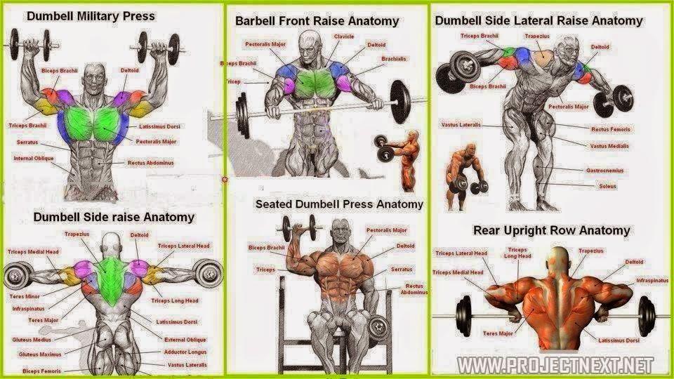 Top 6 Shoulder workouts! | sdasdas
