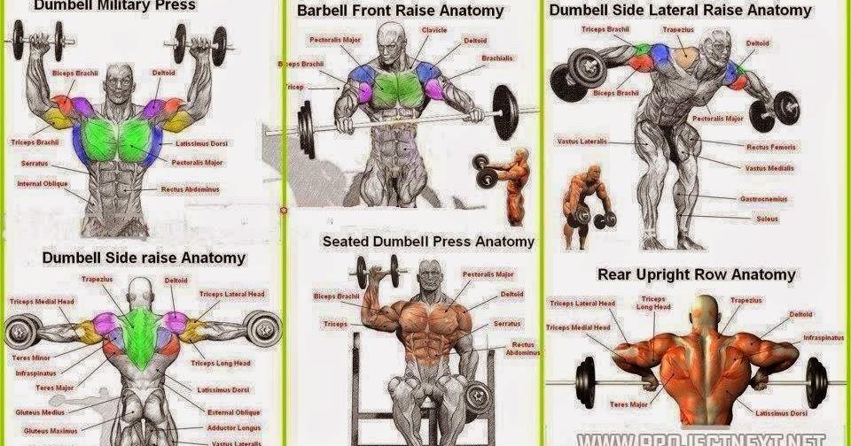 Top 6 Shoulder Workouts Sdasdas
