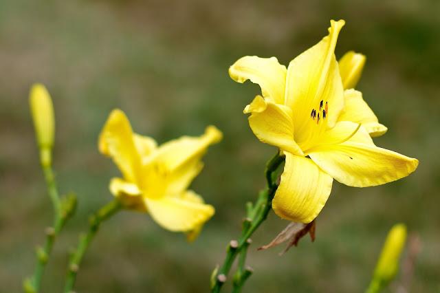 Flowers. Gunnisonville Cemetery Tour, Lansing Michigan. photo by Tammy Sue Allen.