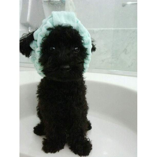 [Picture] 130620 Taeyeon Instagram Update: 'Good morning♥ #gingerB'