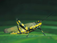 Insects HD 27