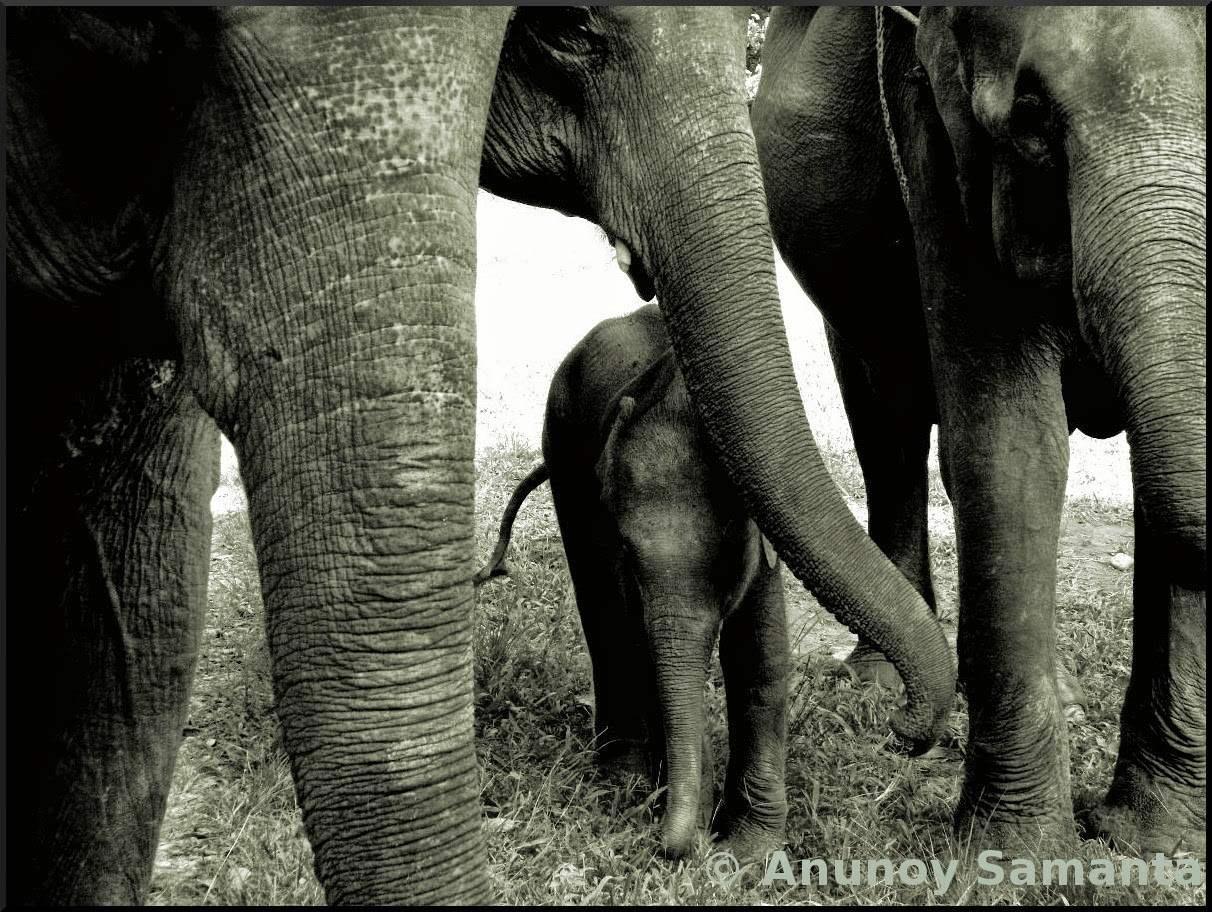 There's a New member in the Elephant Family