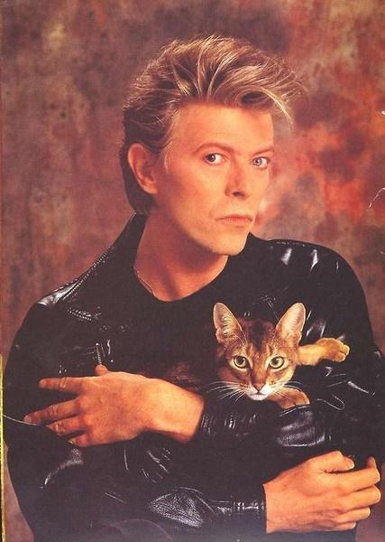David Bowie - Cat People Lyrics | Musixmatch