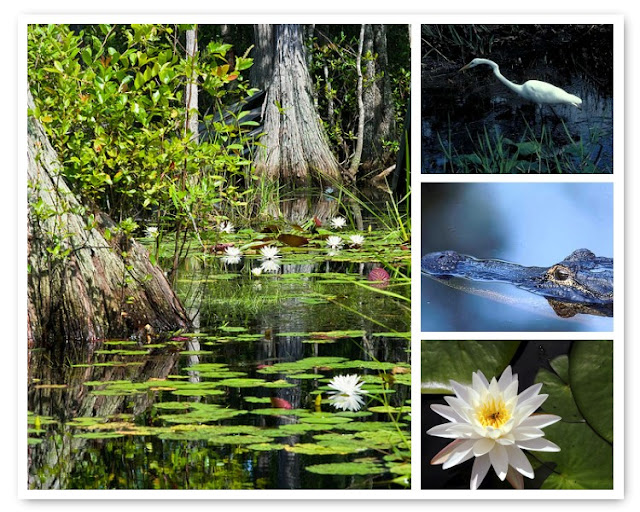 Okefenokee Swamp, Georgia