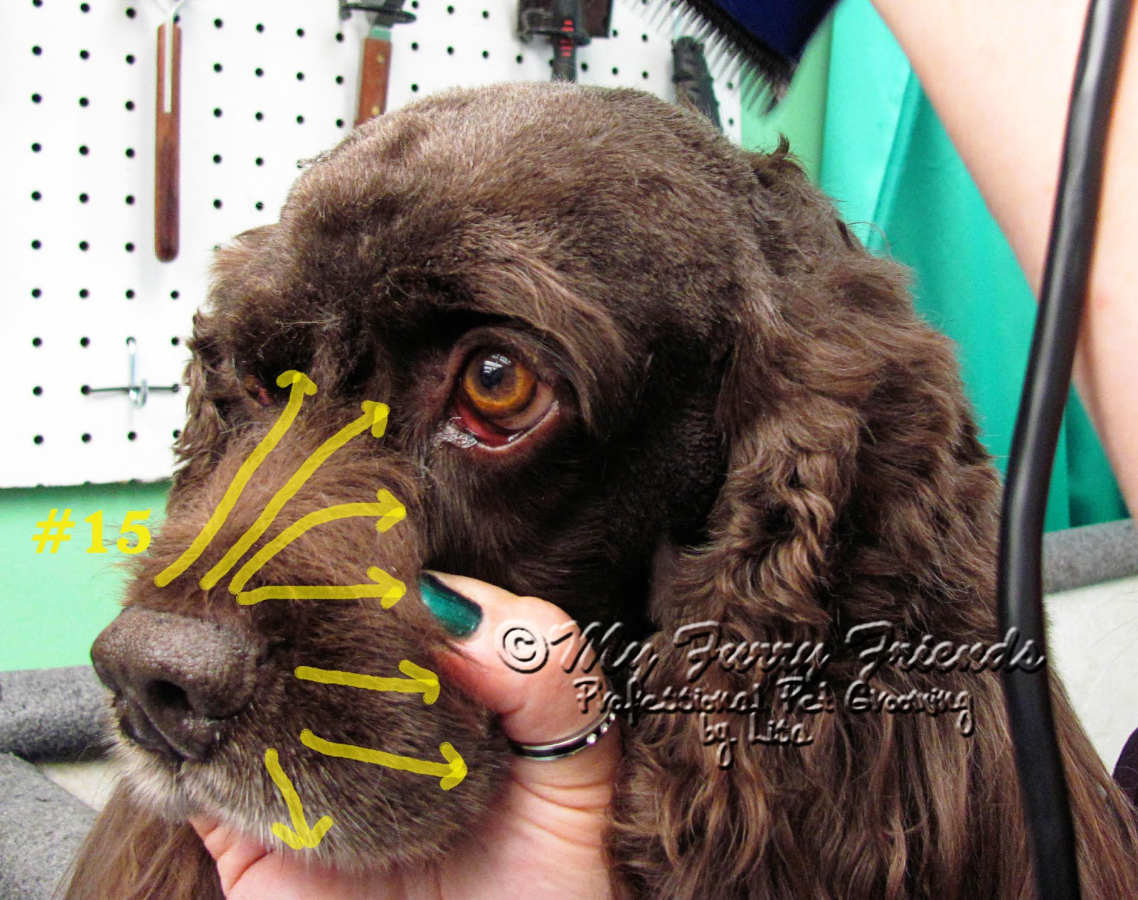 Pet Grooming The Good The Bad The Furry Makeover Monday 17