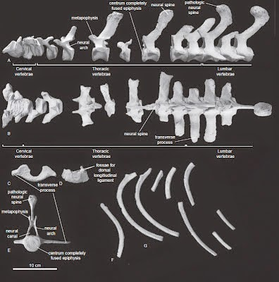 http://sciencythoughts.blogspot.co.uk/2013/09/a-fossil-porpoise-from-early-pliocene.html