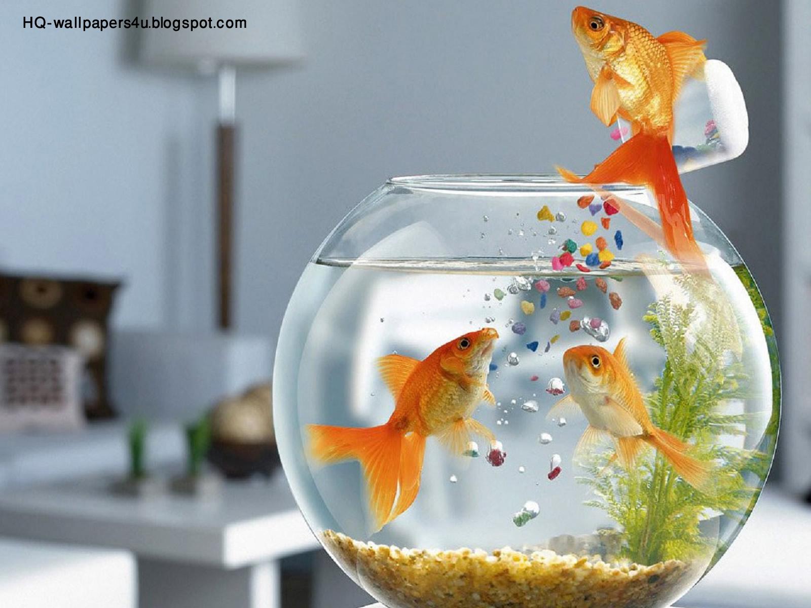 Смотреть один на один с рыбкой 17 фотография