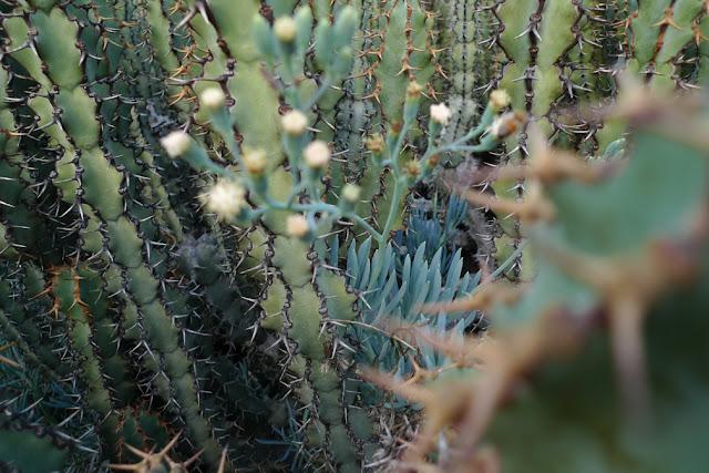 © 2012 Amber Schley Iragui, Huntington Gardens, California
