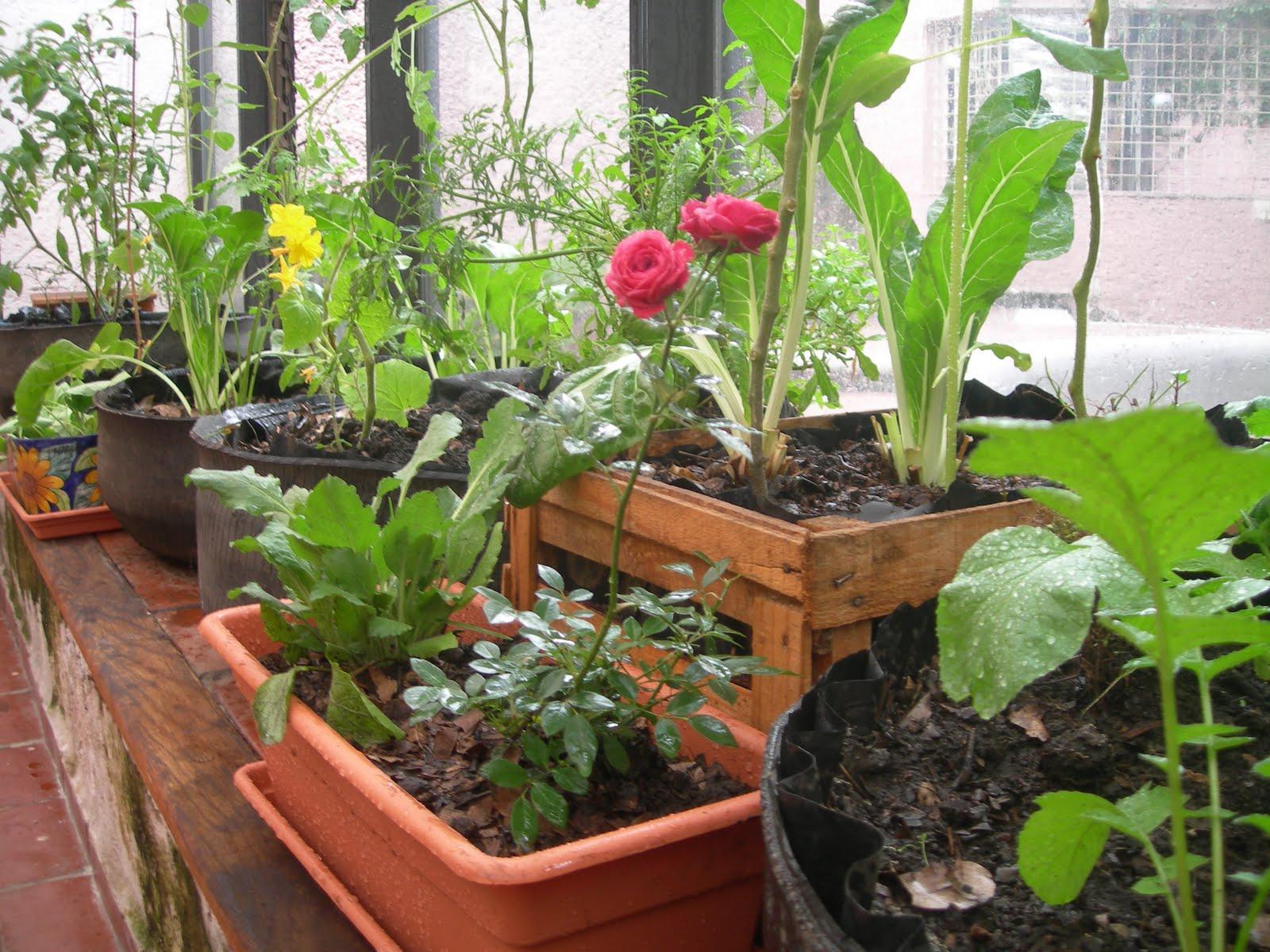 Collacios de la guerta cultivar entre las flores for Que plantas se siembran en un huerto