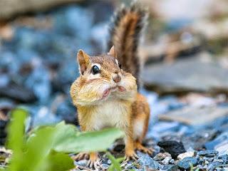 Esquilo assustado