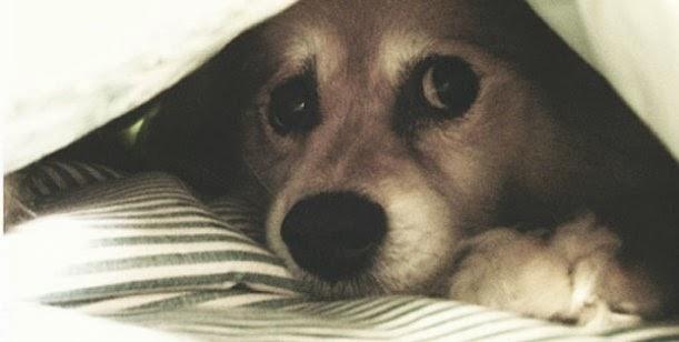 Cuidados y consejos para proteger a las mascotas de la pirotecnia 0001421965