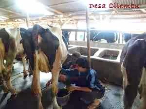 STIT Nurul Hikmah Cianjur KKN di DESA CILEMBU