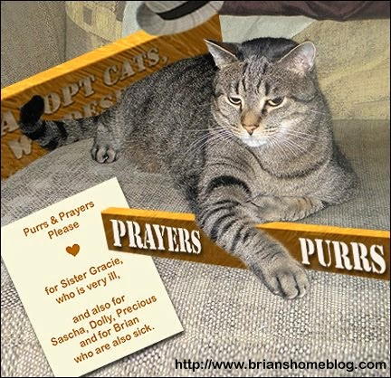 Purrs and Prayers for Brian's Family