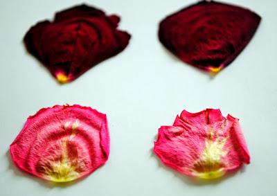 rose séchées fleurs dried flowers