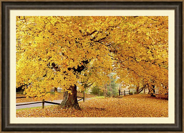 Kentucky Fall Framed Print