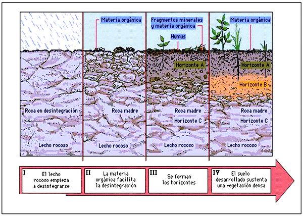 El blog del profe de biolo material clase de suelos para for Componentes quimicos del suelo