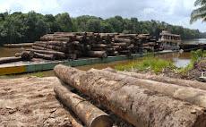 PORTUGUÉS: Brasil continua liderando as mortes de ativistas ambientais