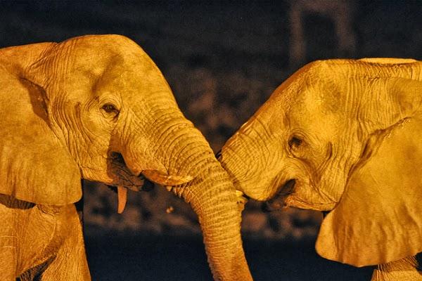 from Zane gay elephants in the wild