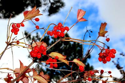 Imágenes de otoño por España. Blog de viajes por España