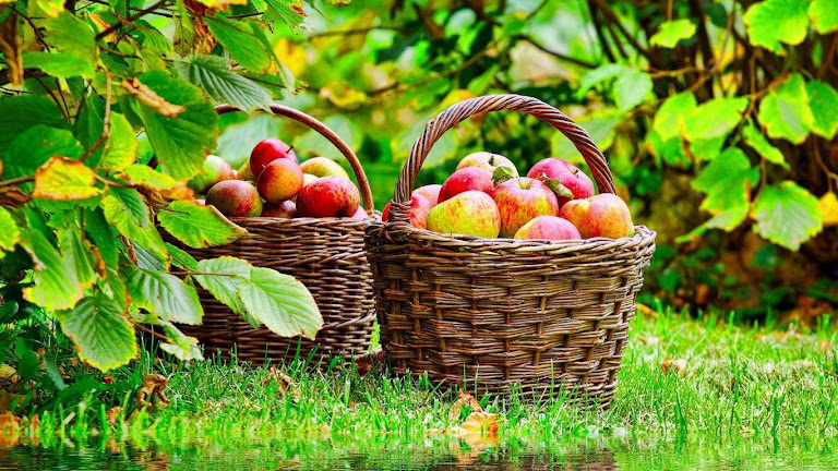 Delicious Apple HD Wallpaper 4
