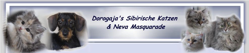 Dorogaja's Sibirische Katze & Neva Masquarade