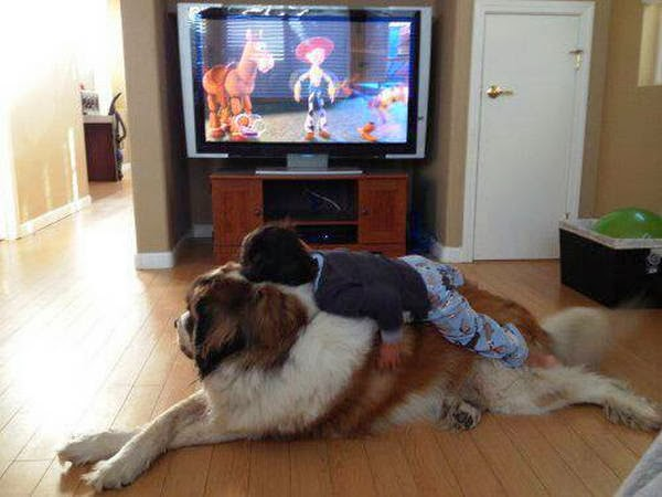 Cute dogs - part 8 (50 pics), boy lays on st. Bernard dog's back while watching toy story on tv
