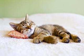 Dormir princesa