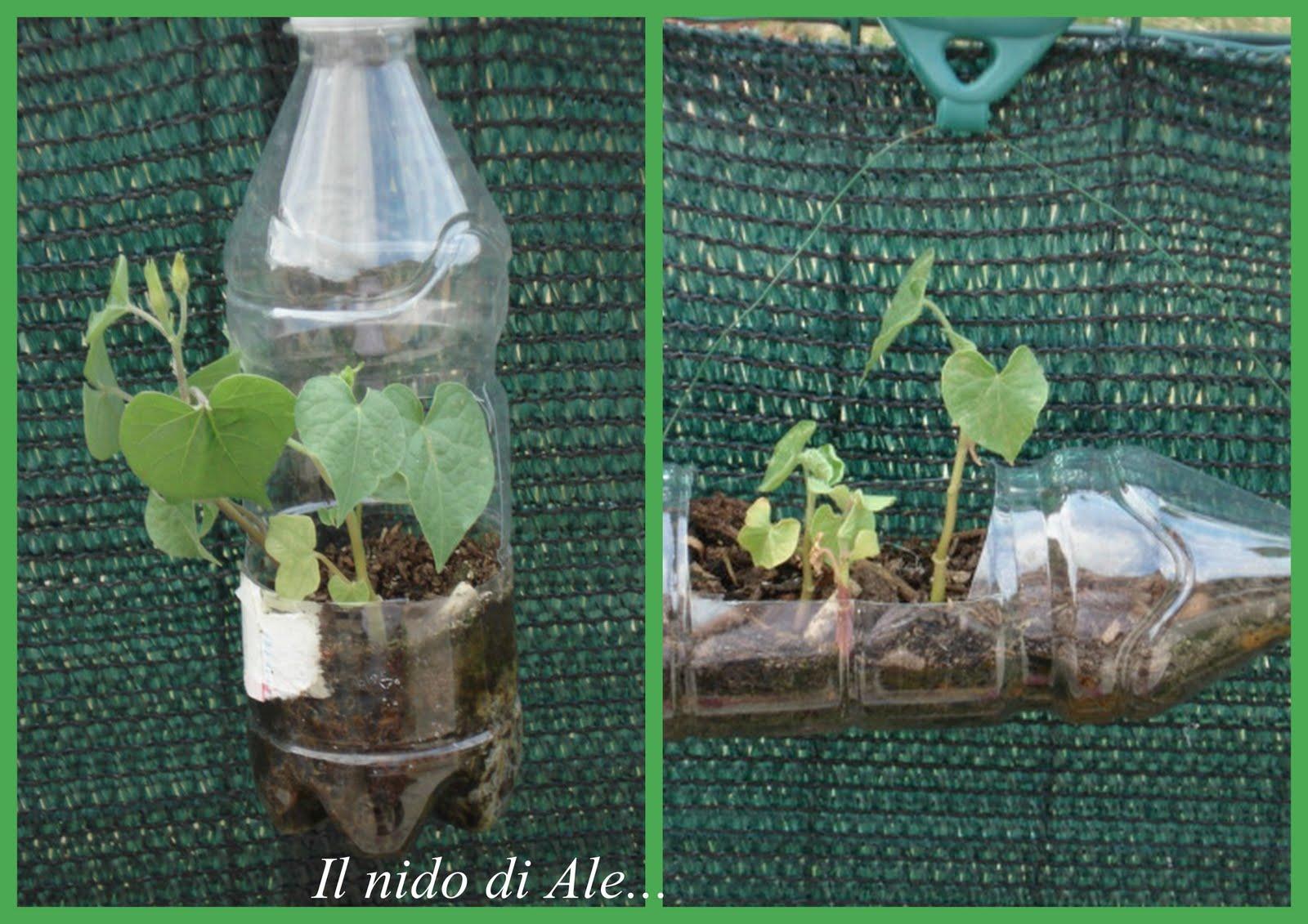 Il mio nido mini giardino in bottiglia - Giardini in bottiglia ...