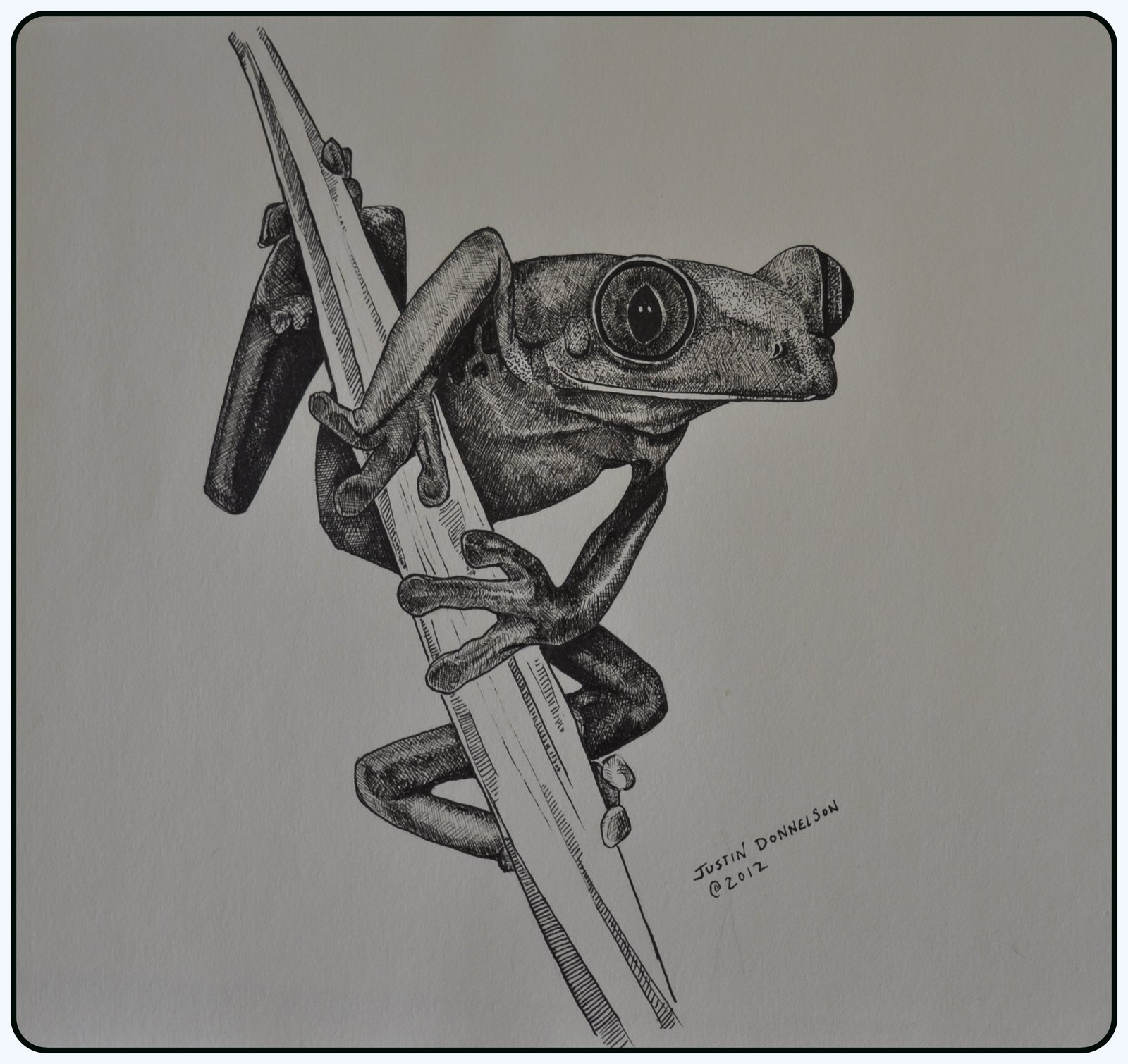 Frog Horse Drawing Pen And Ink Frog Drawing From
