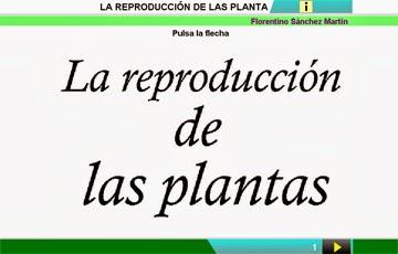 http://cplosangeles.juntaextremadura.net/web/edilim/curso_2/cmedio/plantas02/reproduccion_plantas02/reproduccion_plantas02.html