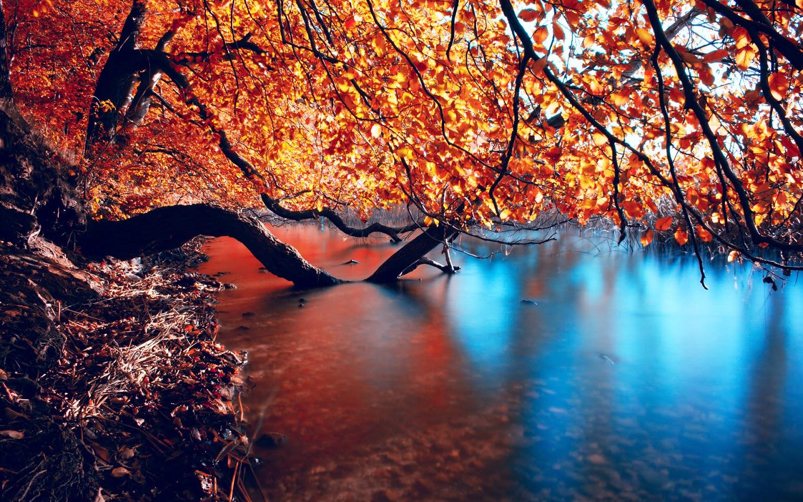 nature wallpaper 5 pt2 - photo #24
